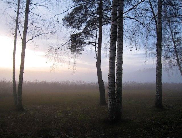 Autumn mist, Southern Finland Nov.2012  2012©WhiteNote/Terhi Harper