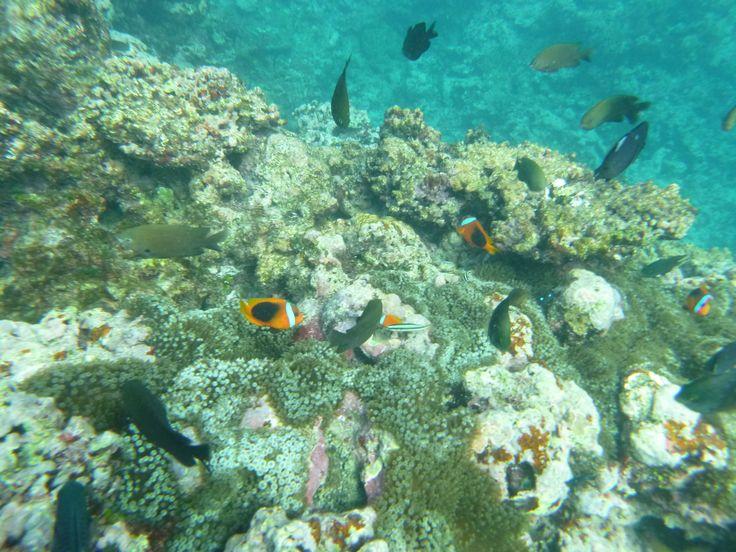 Snorkelling - Vanuatu