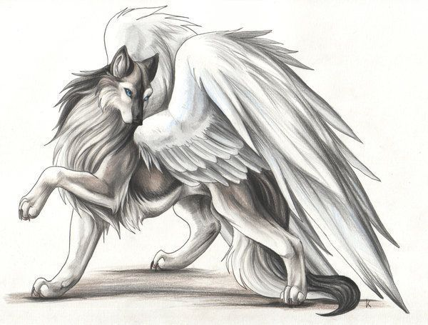 Tribal Winged Wolf Drawings On Pinterest