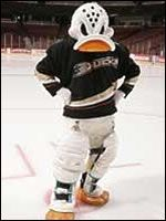 Wild Wing from the Anaheim Ducks: the only NHL mascot to spin off from a movie. This bird once spent a long period of time airborne when a cable lowering him into the arena became stuck and he had to be rescued.  Willing to try anything, Wild Wing was supposed to open the 1995 season by jumping off a trampoline over a wall of fire. But when his skate got stuck in the trampoline, Wild Wing didn't quite make it over the wall, becoming a flambed duck in one of the most famous mascot injuries…