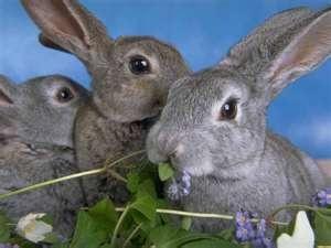 Bunnies!!!!: Bunnies Rabit, God Beautiful, Bunnies Hop, Funny Bunnies, Rabbitsand Cottontail, Grey Bunnies, Bunnies Rabbit, Beautiful Creatures, Adorable Animal