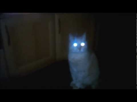 Tapetum Lucidum  Cats, dogs, and many nocturnal creatures appear to have glowing eyes because the back of their eyeballs include a special reflective layer called the tapetum lucidum.