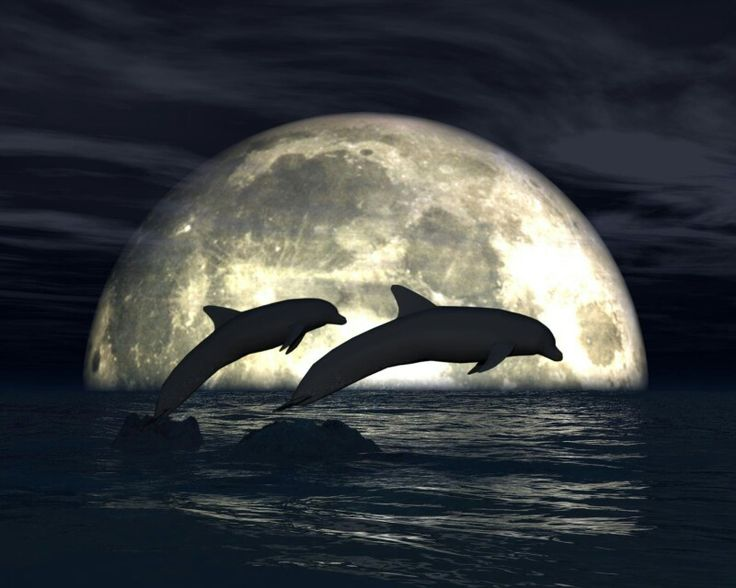 Full moon with dolphins