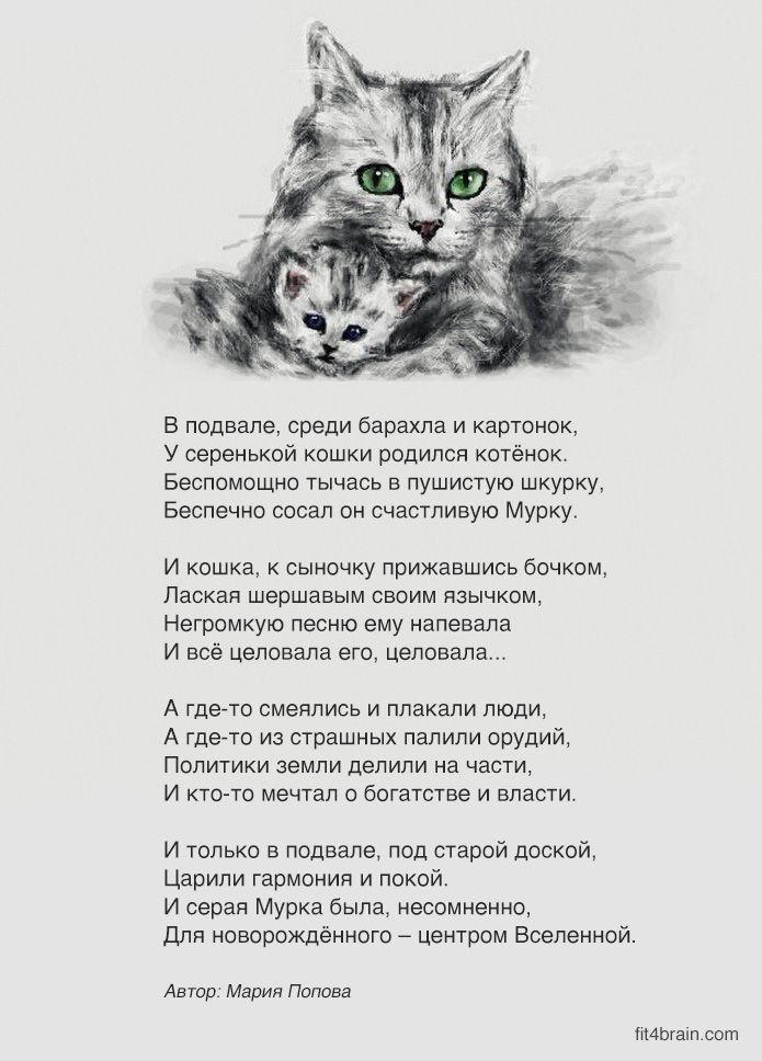 автомобиль крышку картинки кошки стихами парусам снова популярна