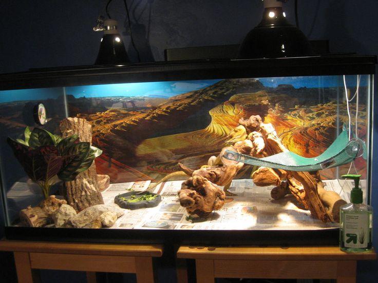 17 Best ideas about Bearded Dragon Habitat on Pinterest ... - photo#7