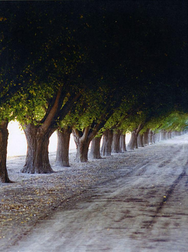 Mendoza.  sara remington photography