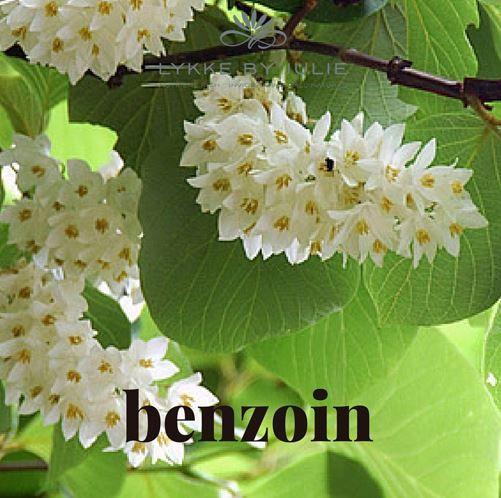 Benzoin er en harpiks som kommer fra Styrax-Benzoin treet. I østlige og sørøstlige Asia har Styrax Benzoin treets sevje ( harpiks ) vært brukt siden antikken i røkelse, parfyme og som medisin.  Vi bruker den i våre blandinger fordi den er antiseptisk, heler sår, sprukken hud og sprø negler. Og den har en herlig aroma!