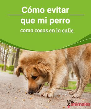"""""""Cómo evitar que mi perro coma cosas en la calle - """""""" Cuando sacamos a pasear a nuestra mascota debemos tener cuidado que no coma cosas en la calle, porque es probable que ingiera lo que encuentre. #lacalle #comer #evitar #alimentación"""