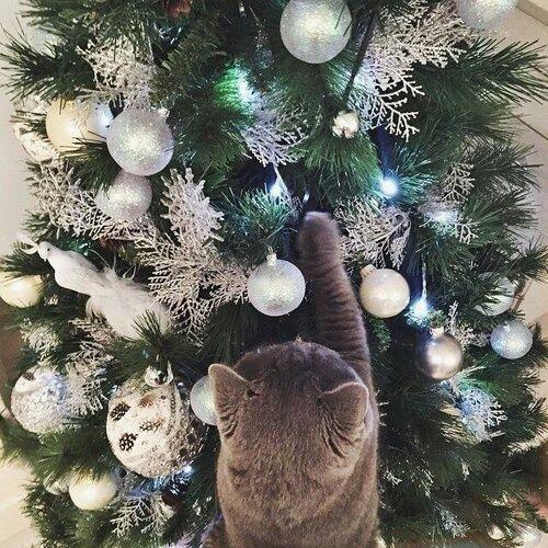 #gato #árbol #bolas #luces #navidad