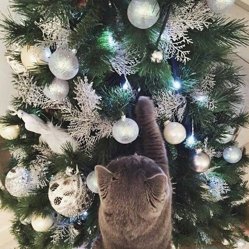 Tumblr pictures christmas tree