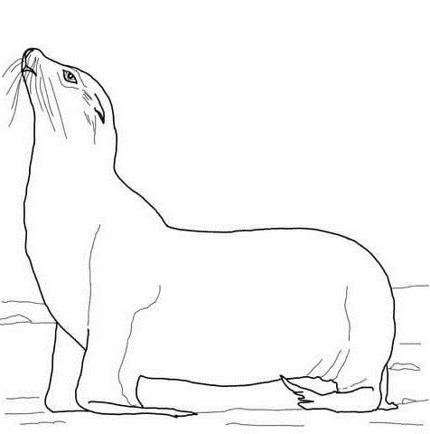 Sea Lion On A Beach