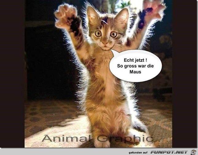 sooo gross | Katze lustig, Katzen lustige sprüche, Lustige