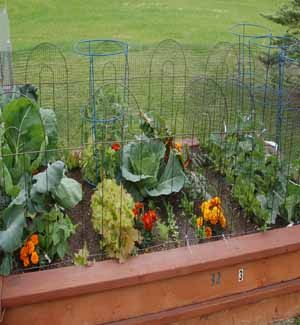 The benefits of good soil in your vegetable garden
