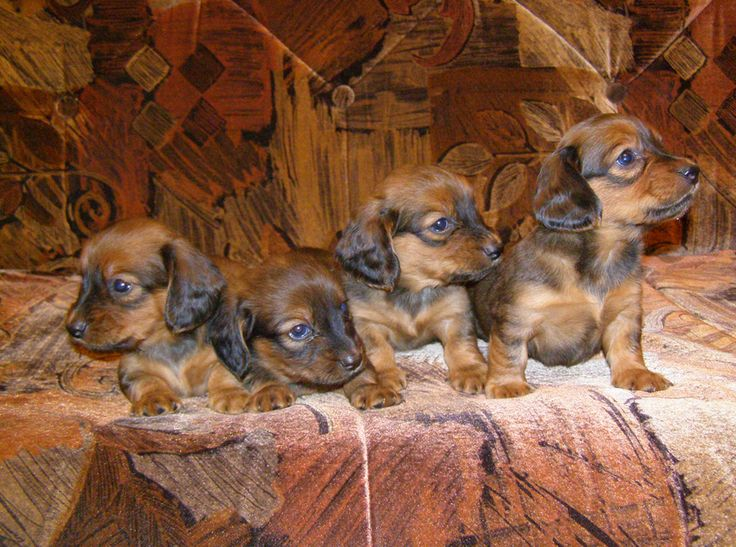 10 Telling Signs That The Breeder You're Buying From Is Bad News