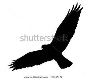 free hawk silhouette vector - Bing Images