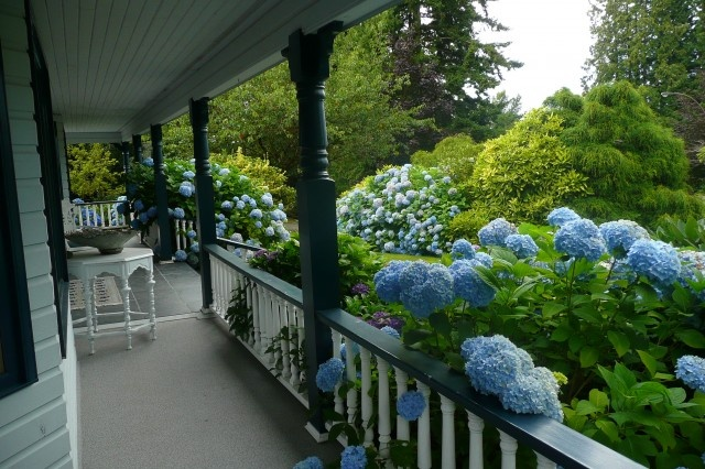 inspiration for a wrap around porch bordered by Hydrangea bushes
