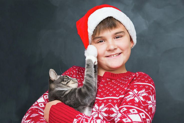Boy Photograph - Happy Boy In Red New Years Cap With Gray Kitten In His Hands On by Mariia Kalinichenko