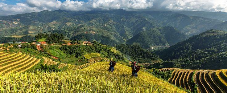 Yen Bai - Mu Cang Chai. #vietnam #yenbai #mucangchai #rice #terrace #travel #wandering