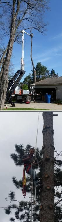 Would you like to find a company who does tree stump removal and tree pruning services? Try Arborite Outdoor Services. This company is always available for your needs.