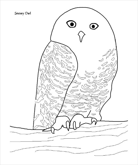 Owl Shape Template 40 Free Pdf Crafts Coloring Documents