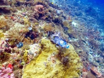 11 Billion Pieces Of Plastic Are Smothering Reefs, Infecting Corals