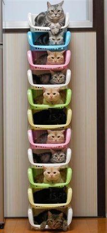 Crazy Cat Lady Organizer II