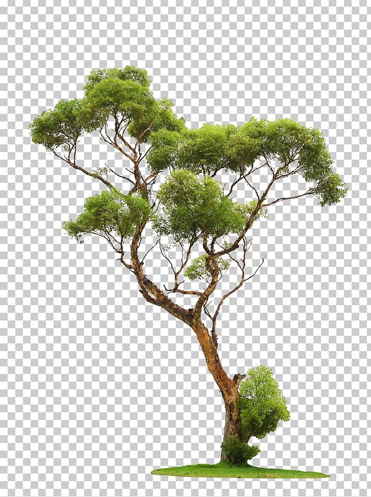 Tree Stock Photography Png Autumn Tree Bonsai Branch Branches Christmas Tree Tree Photoshop Photoshop Nature Photoshop Backgrounds Free