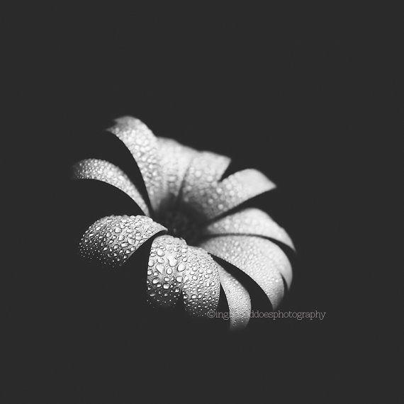 black and white daisy flower print fine art photography
