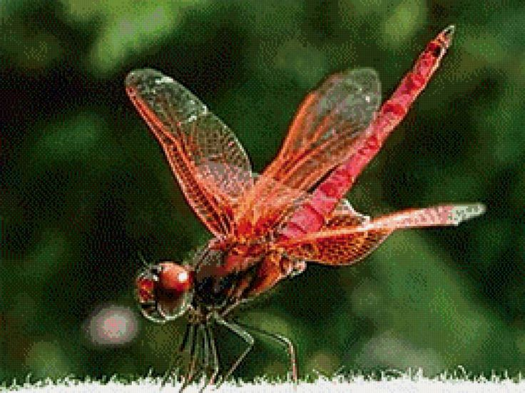 dragonfly dating site If you're ready to start a new chapter with someone who understands your situtation then elitesingles might be the dating site in the dragonfly pool, eva.