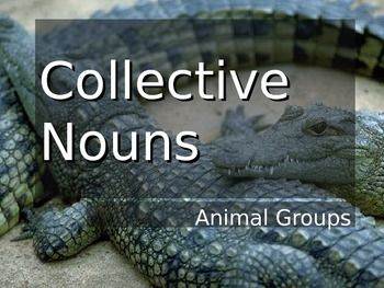 Collective Nouns of Animal Groups PowerPoint. Lists the collective noun names for different animal groups. For example, a congregation of alligators, a sleuth of bears, and a murder of crows are just a few of the unusual group animal names found in the English language.