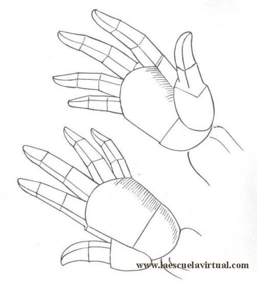 Aprende a dibujar manos de adulto, de niño, tutorial gratis curso ...