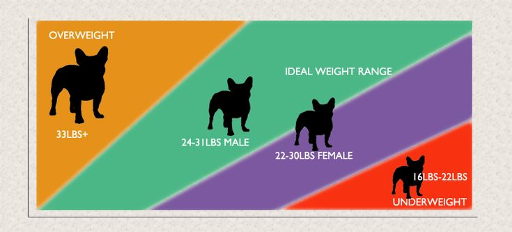 French Bulldog Weight Guide French Bulldog Weight French