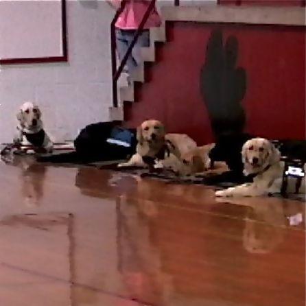 Dog Training For Human Seizures