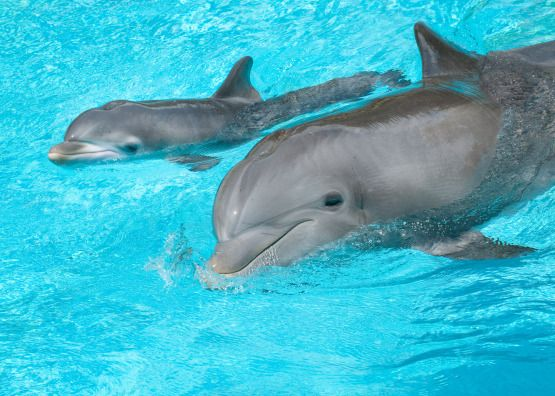 Dolphin Mommy and Baby