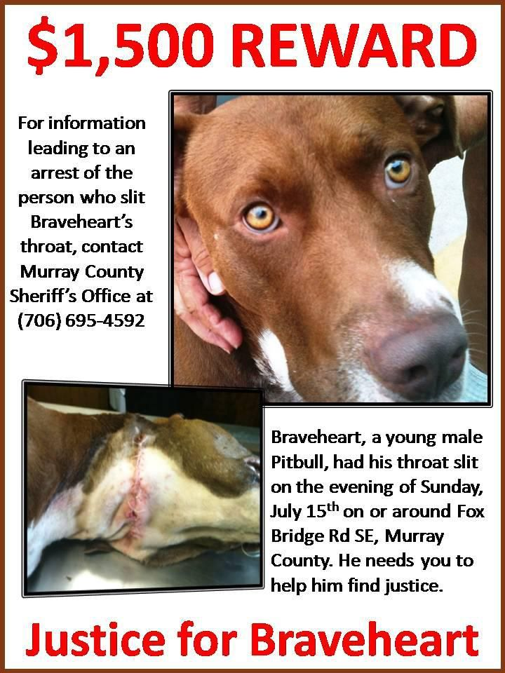 Justice for Braveheart - Braveheart, a young male Pitbull, had his throat slit on the evening of Sunday, July 15th on or around Fox Bridge Rd SE, Murray County. He needs you to help him find justice. $ 1,500 Reward http://www.cbsatlanta.com/story/19069915/dogs-throat-slit-to-stop-barking