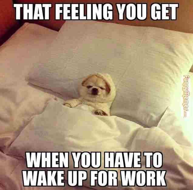 26 Wake Up Memes To Make Your Day Awesome Ladnow