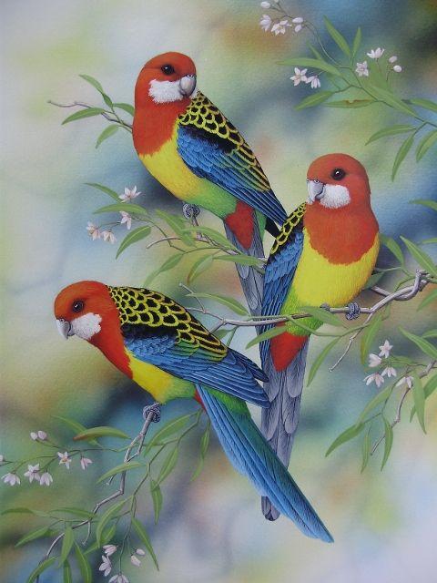Lyn Cooke Artist Specializing in Wildlife