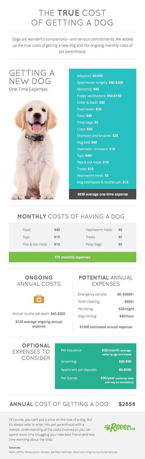 The true cost of getting a dog from http://Rover.com?utm_content=buffera1ac6&utm_medium=social&utm_source=pinterest.com&utm_campaign=buffer