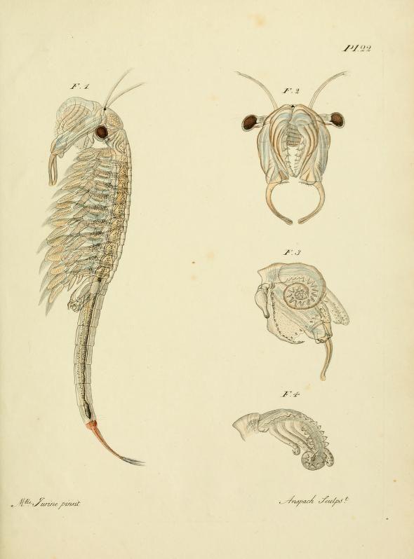 Chirocephale. Histoire des monocles qui se trouvent aux environs de Genève. Genève,J.J. Paschoud,1820. Biodiversitylibrary. Biodivlibrary. BHL. Biodiversity Heritage Library