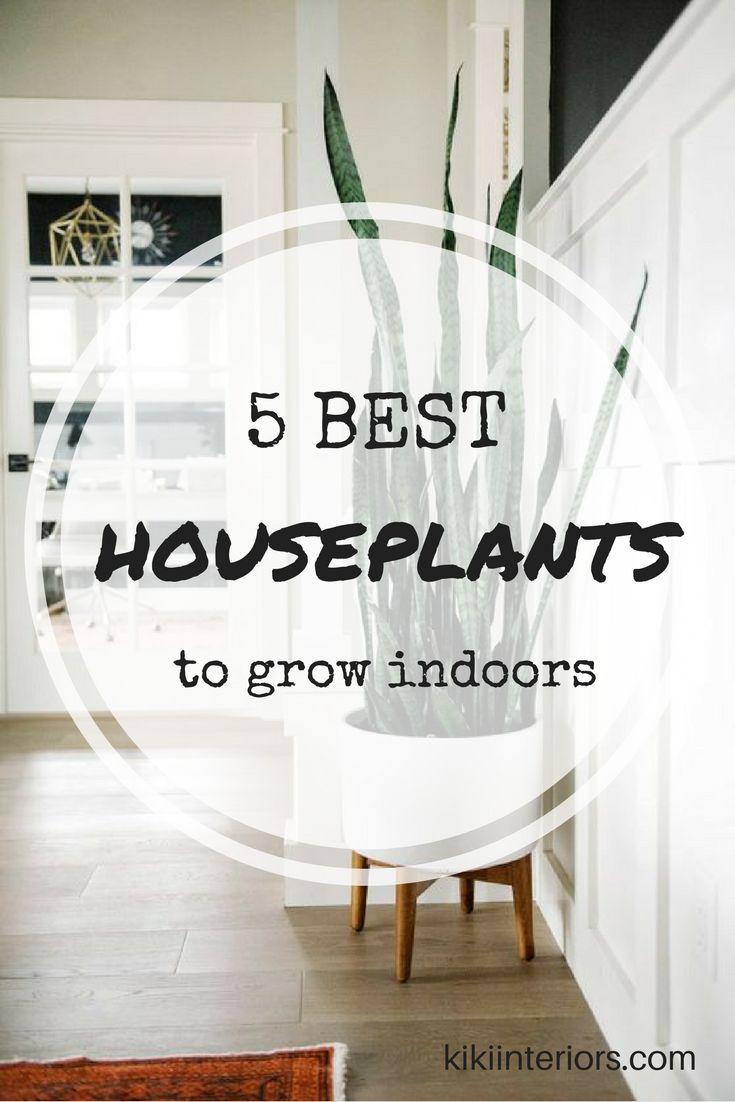 5-best-houseplants-grow-indoors