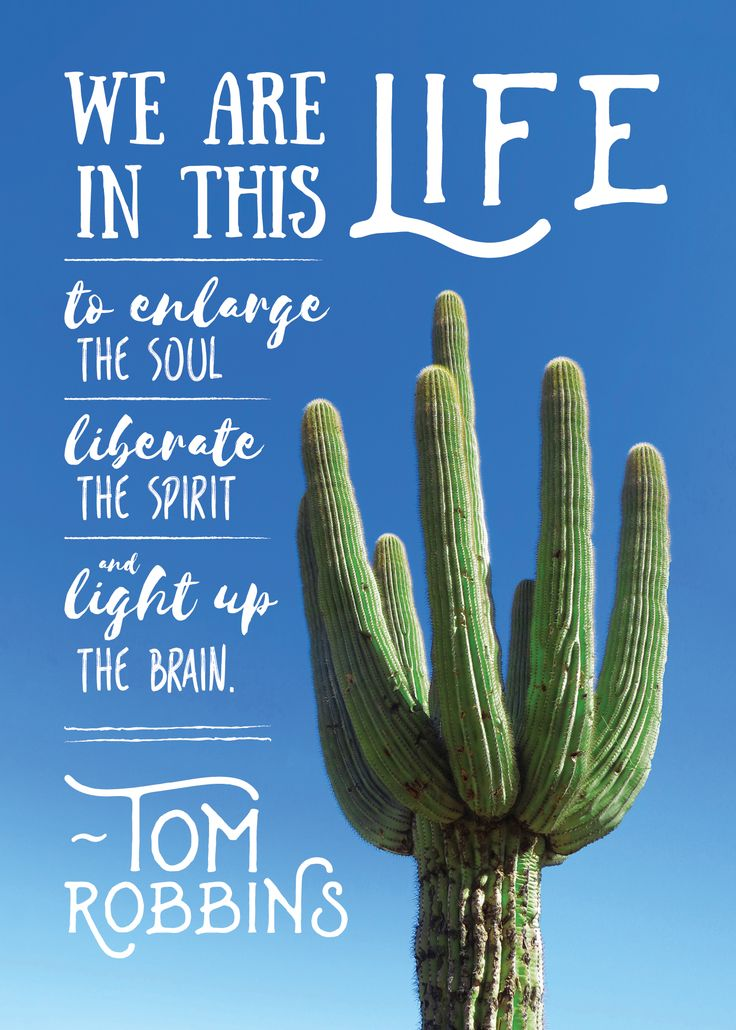 love tom robbins. photograph © me; design © ryan o'meara. <3