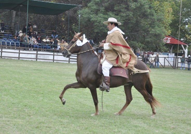 Potro Yaco Serena - Concurso Nacional de caballos peruanos de paso - Salta Argentina