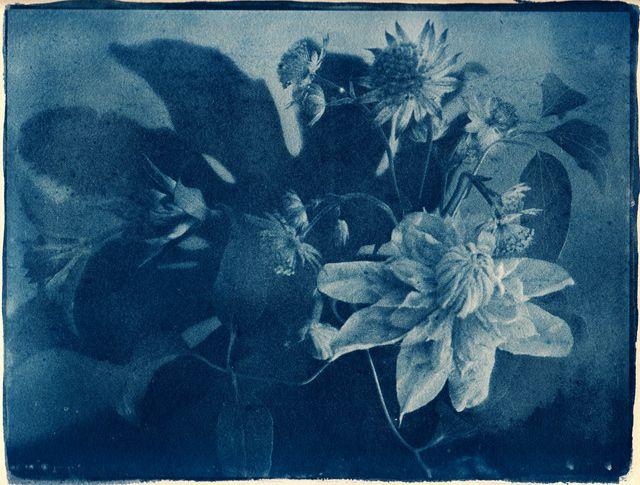 サイアノタイプ感光液の作り方/ Cyanotype Sensitizer MIxing 世界最古の写真技法のひとつサイアノタイプ。…