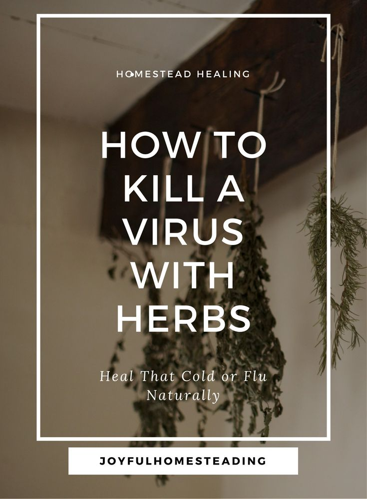 Antiviral herbs are a powerful help for both viral and bacterial infections.