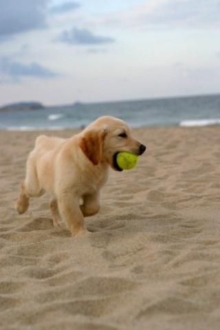 Puppies on the beach, so cute, so innocent.  #beach #puppy