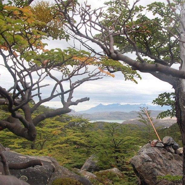 Valle del Francés, Parque Nacional Torres del Paine, XII Región de Magallanes y Antártica Chilena. Fotografía de Teresita Mayol - Photo by chilediscovery