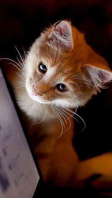 Cute kitten! ❤
