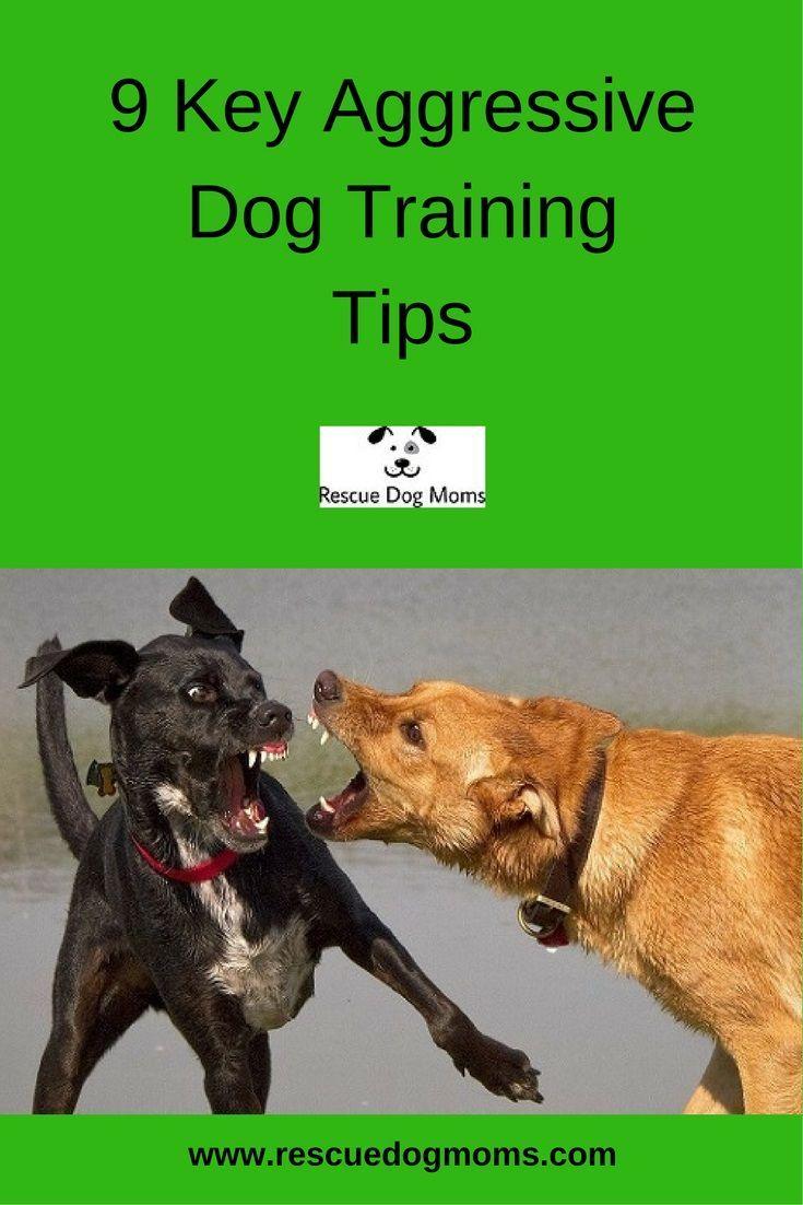 9 Key Aggressive Dog Training Tips Aggressive Dog Dog Training
