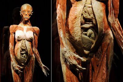"""Gunther Van Hagans' """"Body Worlds""""...""""Plastination unveils the beauty beneath the skin, frozen in time between death and decay."""""""