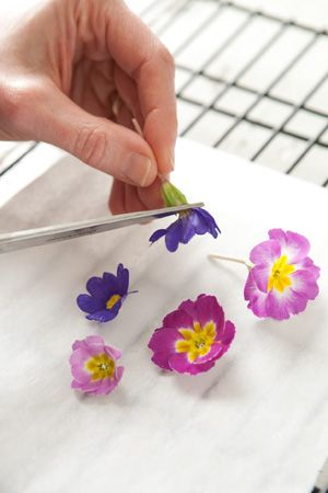 How to video on making edible sugar flowers. Rinse and dry chosen edible flowers. (We used primrose. For other recommendations, click here.) Remove any pistils and stamens, and cut the stems at base of flowers. Place flowers on parchment paper on a cooling rack